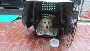 巣鴨地蔵通り商店街 10月14日の縁日犬